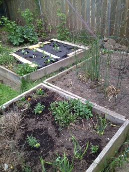 getting the garden ready, May 2016